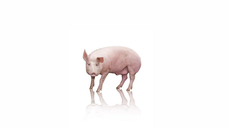TrypAMINO®: Wir entlasten in der Tierzucht das Klima.